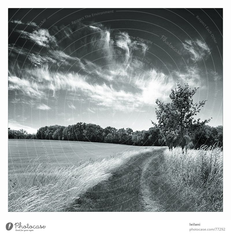 dieser Weg Himmel Baum Wolken Wiese Wege & Pfade Linie Wind Europa