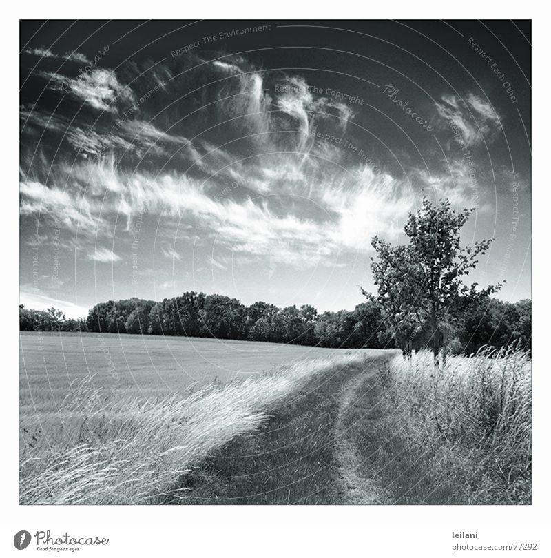 dieser Weg Wolken Wiese Baum Europa Himmel Wege & Pfade Wind Schwarzweißfoto Linie