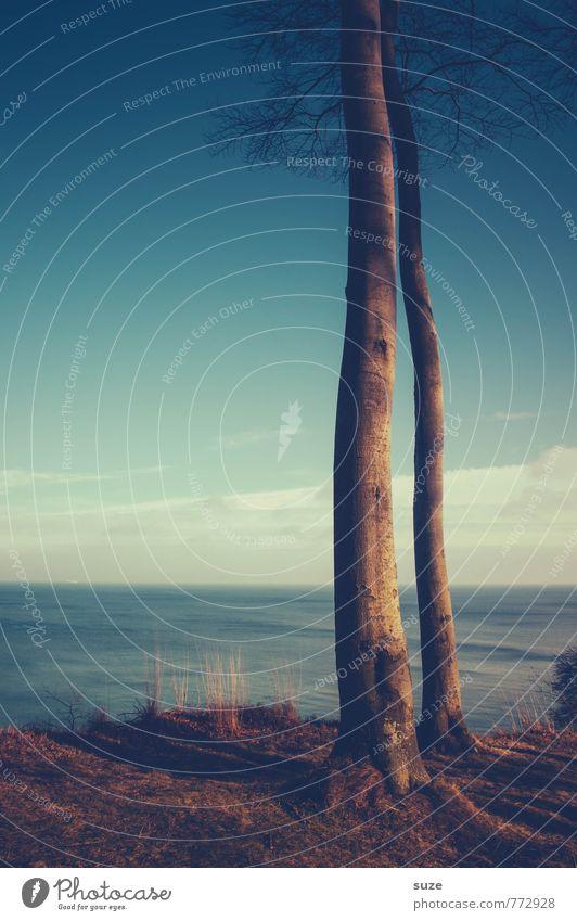 Zusammen-wachsen Himmel blau Baum Meer Einsamkeit Erholung ruhig dunkel Gefühle Küste Freiheit Stimmung Horizont Paar Zusammensein Zufriedenheit