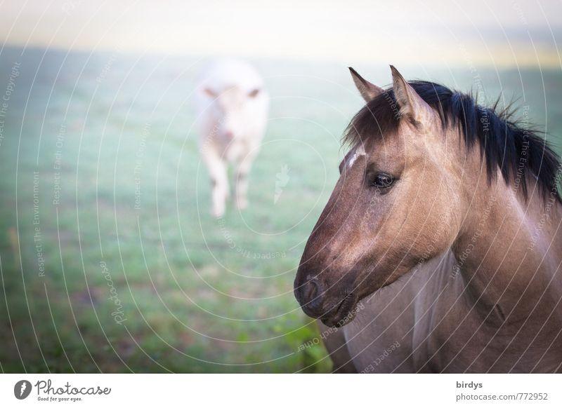 Dülmener Wildpferd mit Nahrungskonkurent Natur schön Tier Wiese natürlich Zusammensein Nebel Kraft ästhetisch bedrohlich beobachten Neugier Pferd Wachsamkeit