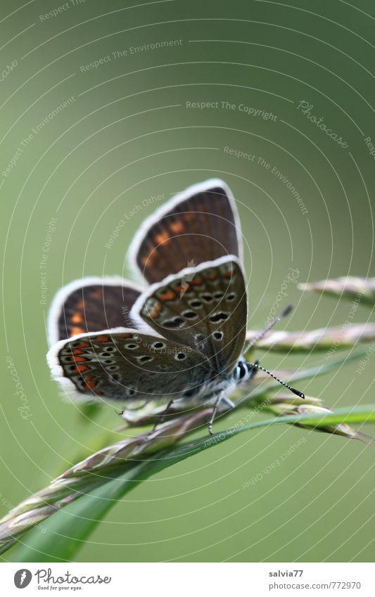 Freisitz Ruhestand Umwelt Natur Pflanze Tier Sonne Frühling Sommer Grünpflanze Wildpflanze Wiese Wildtier Schmetterling 1 berühren natürlich grün Glück ruhig