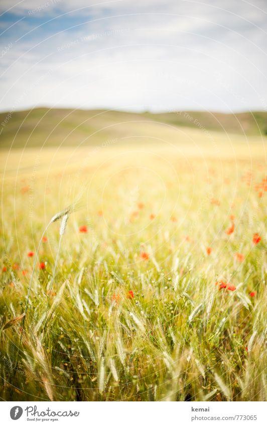 Mohntag Himmel Natur Ferien & Urlaub & Reisen Pflanze schön grün Sommer rot Landschaft Wolken Umwelt Wiese hell Horizont Feld Tourismus
