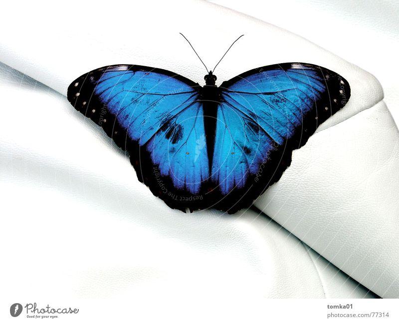 Napa-Leda-Luda Schmetterling Sofa weiß Tier Möbel Leder mehrfarbig Sessel Chefsessel Reichtum Gelassenheit Innenaufnahme Makroaufnahme Nahaufnahme schön blau