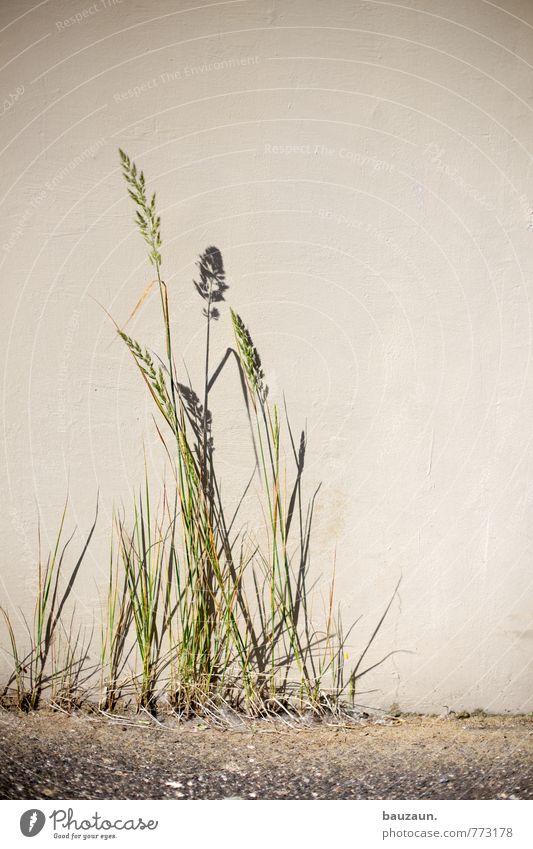 HH-Peute | graaas. Garten Gartenarbeit Pflanze Gras Park Wiese Platz Mauer Wand Fassade Wege & Pfade Wachstum grün Kraft Natur Farbfoto Gedeckte Farben