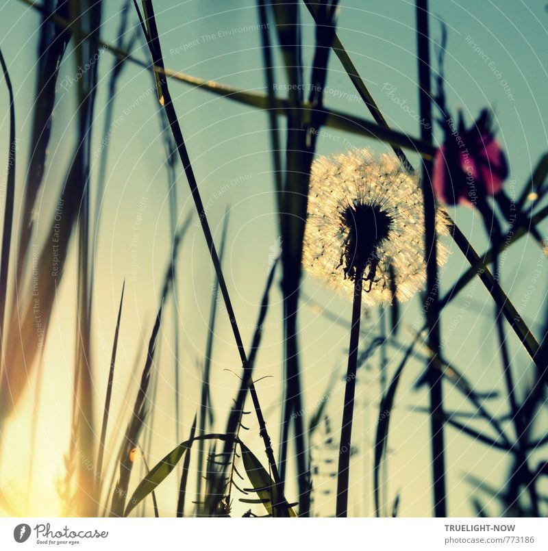 Hommage à KEMAI / Elfentraum Himmel Natur Pflanze Sommer Sonne Erholung Blume Landschaft ruhig Blatt Wiese Gras Blüte Glück Garten träumen