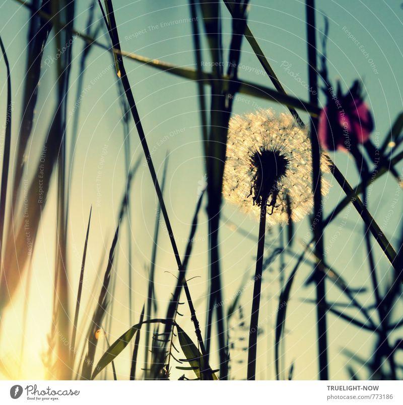 Hommage à KEMAI / Elfentraum Wellness harmonisch Sinnesorgane Erholung ruhig Meditation Sommer Sonne Garten Natur Landschaft Pflanze Urelemente Himmel