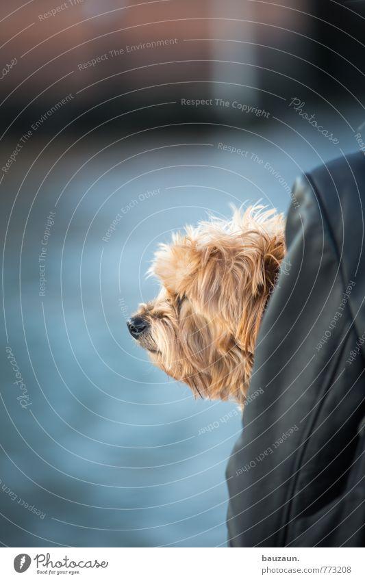 HH-Peute   mit hundeblick. Hund Tier Ferne Zusammensein Ausflug genießen beobachten Hoffnung Neugier Hafen Fell Tiergesicht Schifffahrt Fernweh Haustier