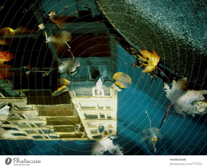 HERBST WENDE Himmel Stadt blau Wasser Blatt Wolken Haus dunkel Fenster Straße Leben Architektur Traurigkeit Herbst Gebäude Freiheit