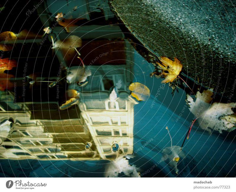 HERBST WENDE Pfütze wirklich Nebel nass Herbst Haus Hochhaus Gebäude Material Fenster live Block Beton Etage trist dunkel Leidenschaft Spiegel Vermieter Mieter
