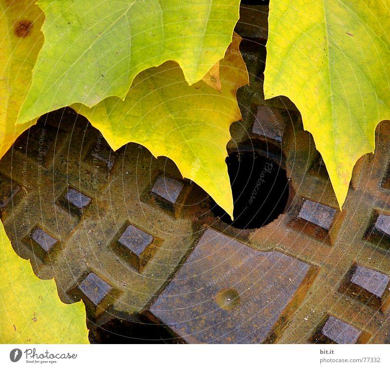 SPITZEN runde alt Blatt gelb Herbst Stimmung unten Richtung Rost Jahreszeiten Loch abwärts Eisen Gully November Bildausschnitt