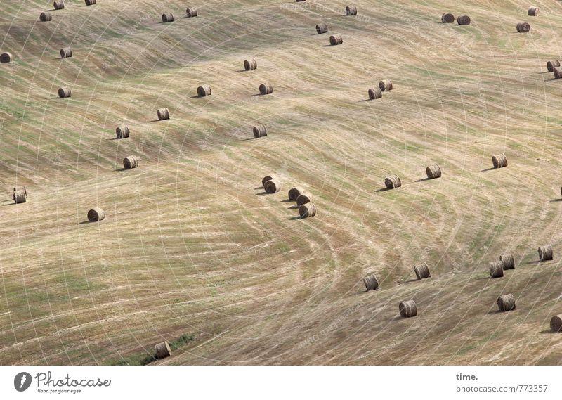 Winterfutter Arbeit & Erwerbstätigkeit Landwirtschaft Forstwirtschaft Pflanze Heu Heuballen Heuernte Feld Hügel Linie Streifen Zufriedenheit Bewegung Design