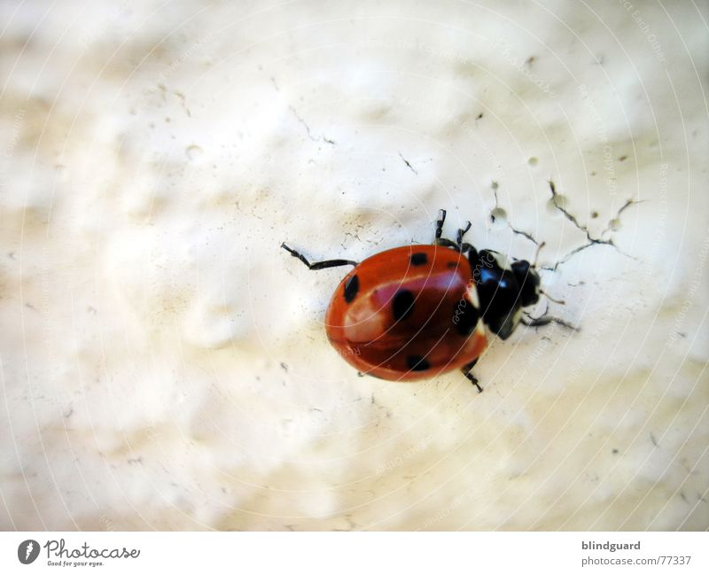 Stretch Nahaufnahme Makroaufnahme Schatten Glück Klettern Bergsteigen Beine Wärme Flügel fliegen krabbeln rot weiß Farbe Marienkäfer Wand Insekt Schiffsbug 6