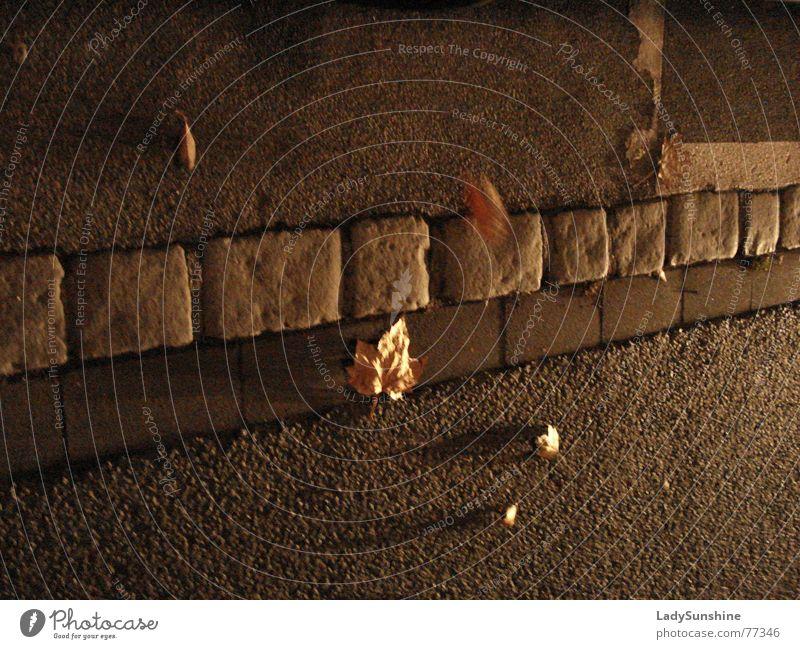 Herbst Blatt diagonal braun Schatten Straße Stein Abend Wind Bewegung