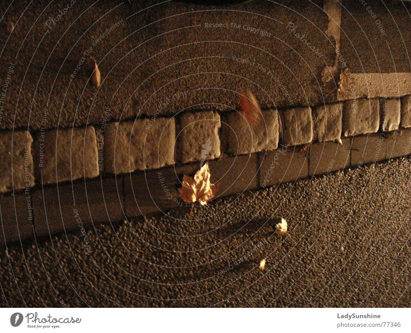 Herbst Blatt Straße Bewegung Stein braun Wind diagonal