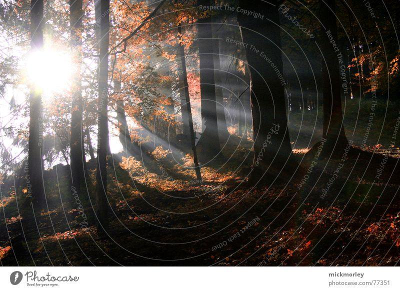 waldlicht Sonne Blatt Wald Herbst Beleuchtung Oktober September