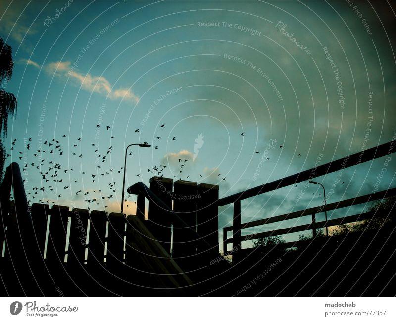 ZUM SONNENDECK Lampe normal Schnickschnack Gegenlicht Stimmung Vogel Himmel Freude sihouette Brücke bridge latenen Treppe staire bird birds ab nach süden