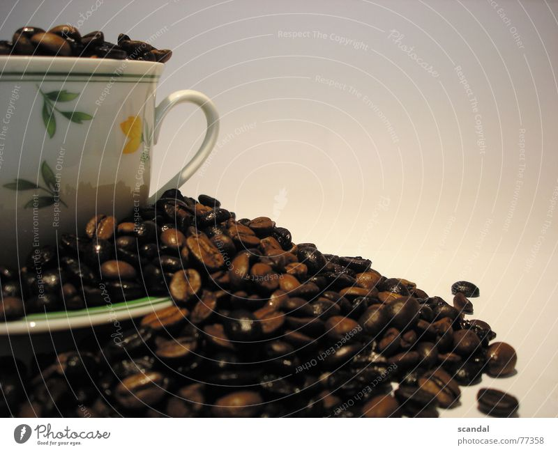 kaffee blau gebraten braun Café Bar Tasse Kaffeetasse schön Kaffeebohnen Bohnen nußbraun himmlisch Lokal geschmackvoll geröstet käffchen ästhetisch trinkschale