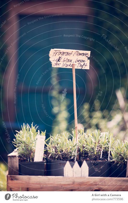 Blumenmarkt 1 Natur Pflanze Blume Frühling natürlich Garten Park Wachstum Schilder & Markierungen kaufen Bioprodukte Markt verkaufen Blumentopf Wegekreuz Lavendel