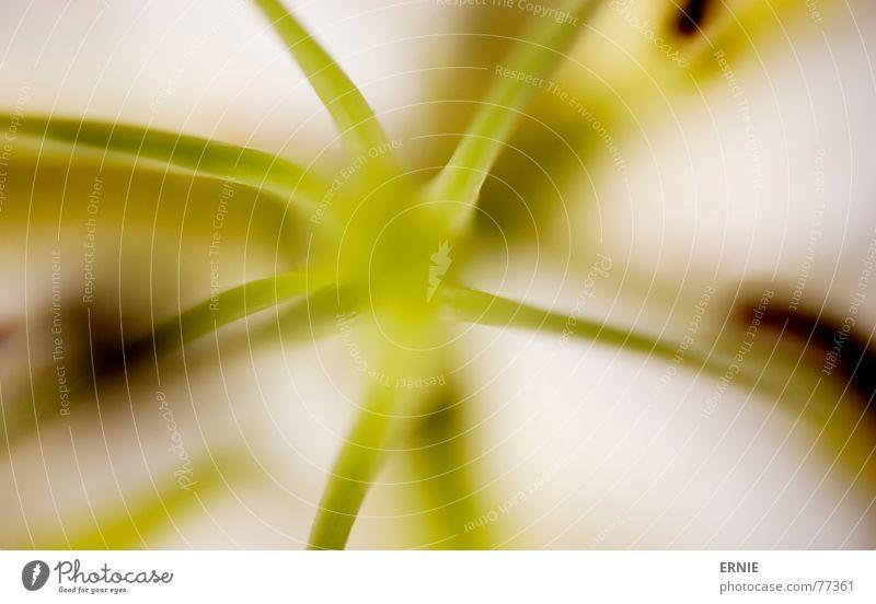 Blöömsche Natur weiß grün schön Pflanze Blume Zeit Stengel Geruch Oder