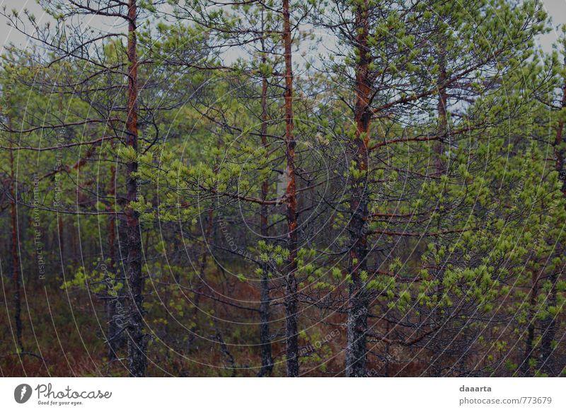 Natur Pflanze Sommer Baum Landschaft Freude Wald Leben Frühling Gras Stil Garten Freizeit & Hobby Wetter Regen elegant