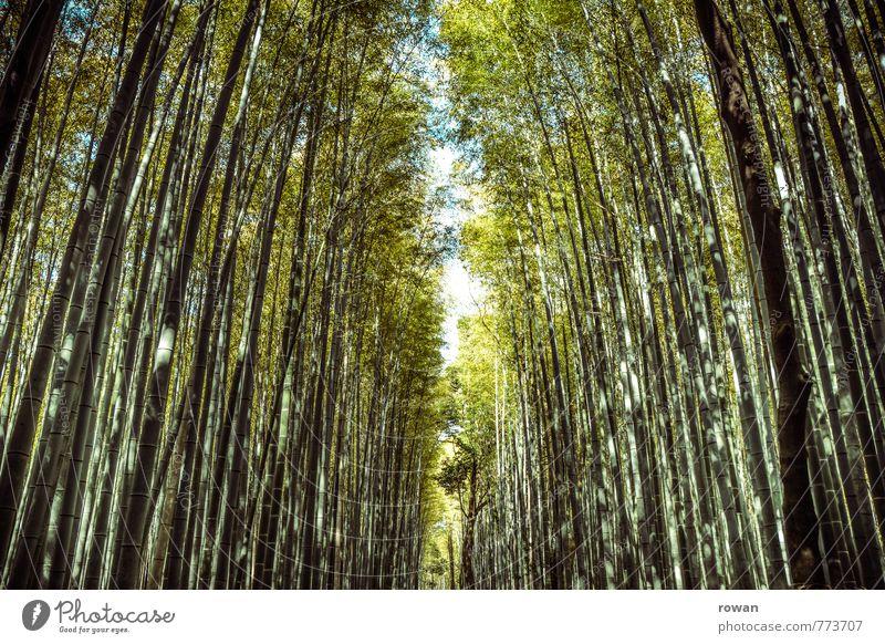 bambuswald Umwelt Natur Landschaft Pflanze Wald außergewöhnlich exotisch Bambus Bambusrohr hoch Spaziergang Asien Japan Öffnung Wege & Pfade eng bedrohlich