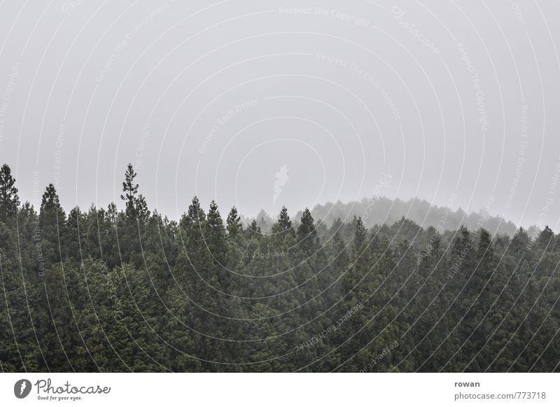 wald Natur grün Baum Landschaft dunkel Wald Regen Nebel trist nass Unwetter schlechtes Wetter