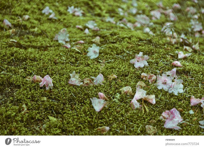 verblüht Umwelt Natur Landschaft Pflanze Erde schlechtes Wetter Moos Blüte dunkel grün Verzweiflung Ende Endzeitstimmung Tod Verfall Vergänglichkeit Zeit