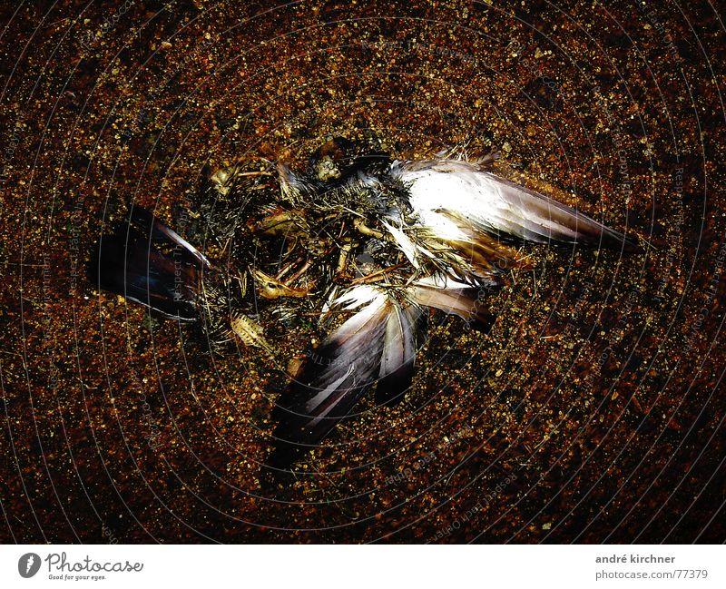 gefallen Stein Erde Flügel Taube Skelett Totes Tier