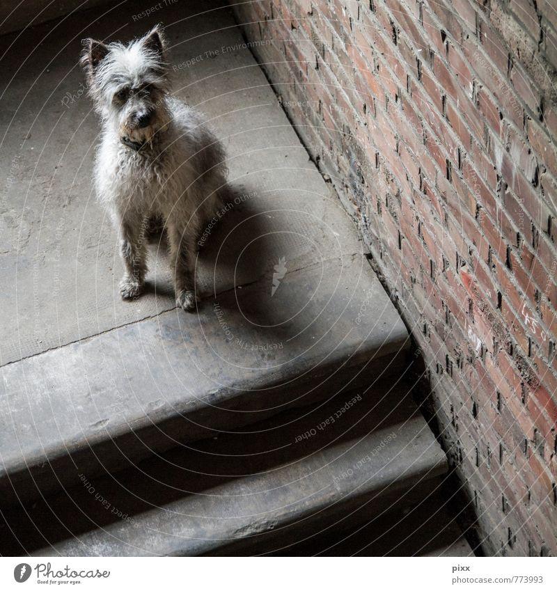 (s)chiller   ich sitz dann mal hier Hund ruhig Tier Wand Traurigkeit Innenarchitektur Mauer grau Denken braun Freundschaft Treppe sitzen warten niedlich weich