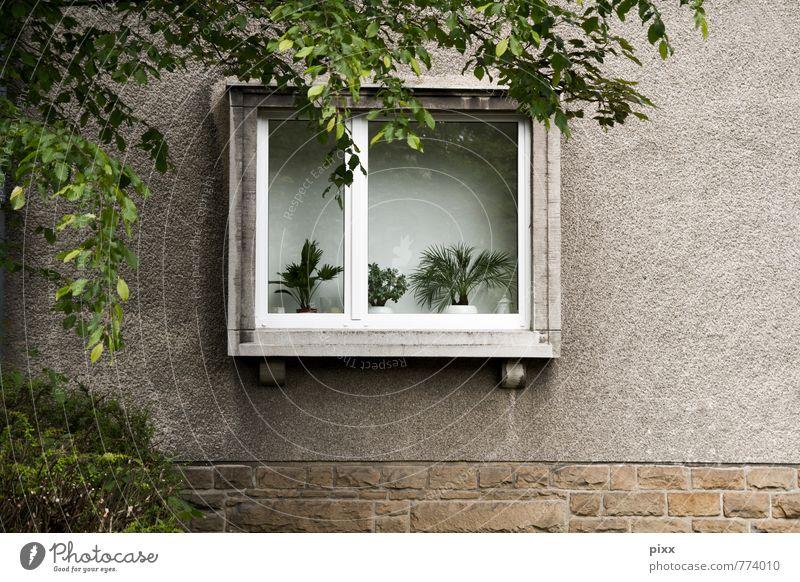 migräne Lifestyle Sommerurlaub Häusliches Leben Wohnung Dekoration & Verzierung Feierabend Pflanze Baum Grünpflanze Topfpflanze Bochum Deutschland Stadt