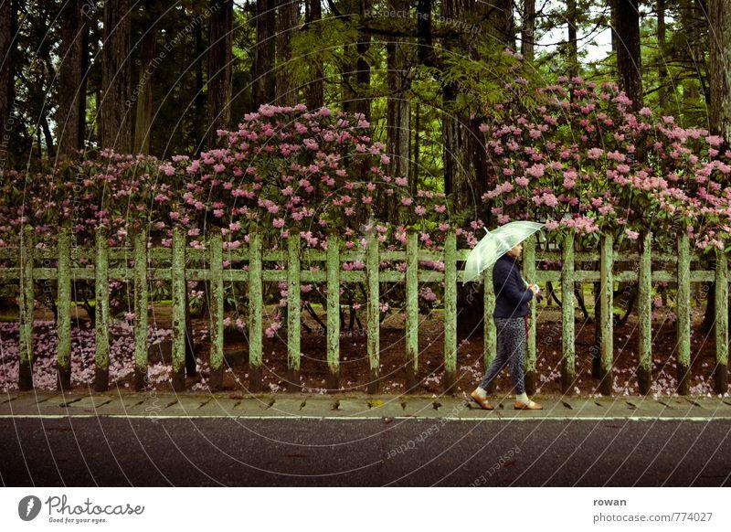 spazieren Mensch Frau Jugendliche Einsamkeit Junge Frau Blume Erwachsene Straße feminin Garten gehen Regen nass Spaziergang Bürgersteig Zaun