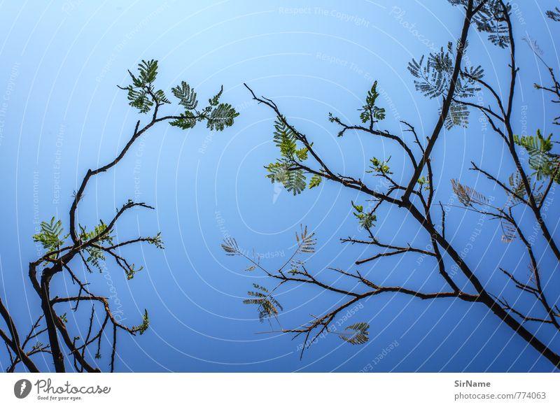 260 [growth is blue-green] Sommer Erneuerbare Energie Sonnenenergie Wolkenloser Himmel Klima Baum leuchten Wachstum einfach Erfolg frei Zusammensein