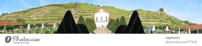 Hofansicht Schloss Wackerbarth Panorama (Aussicht) Weinberg Kultur Außenaufnahme Radebeul Burg oder Schloss wackerbarth kunst hofansicht groß