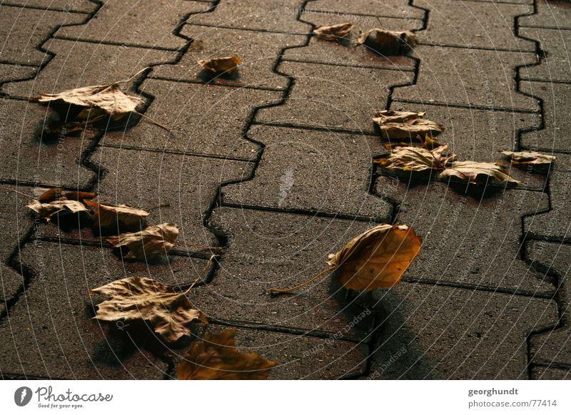 lightning fall Herbst Blatt Herbstlaub Beton Parkplatz Stein betonpflaster Schatten Lichterscheinung Pflastersteine