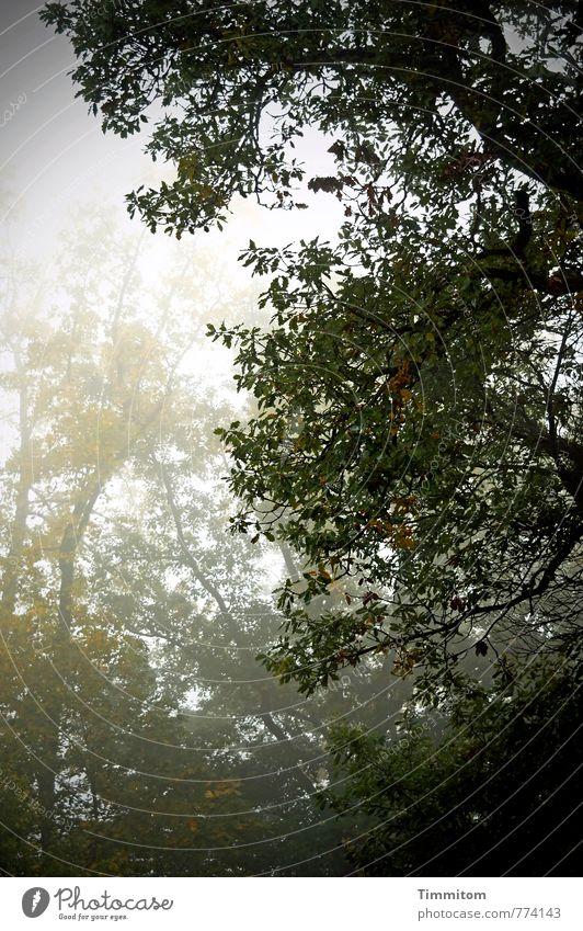 Herbst. Umwelt Natur Pflanze Klima Wetter schlechtes Wetter Nebel Baum Eiche Wald dunkel grau grün schwarz Gefühle Traurigkeit Farbfoto Gedeckte Farben