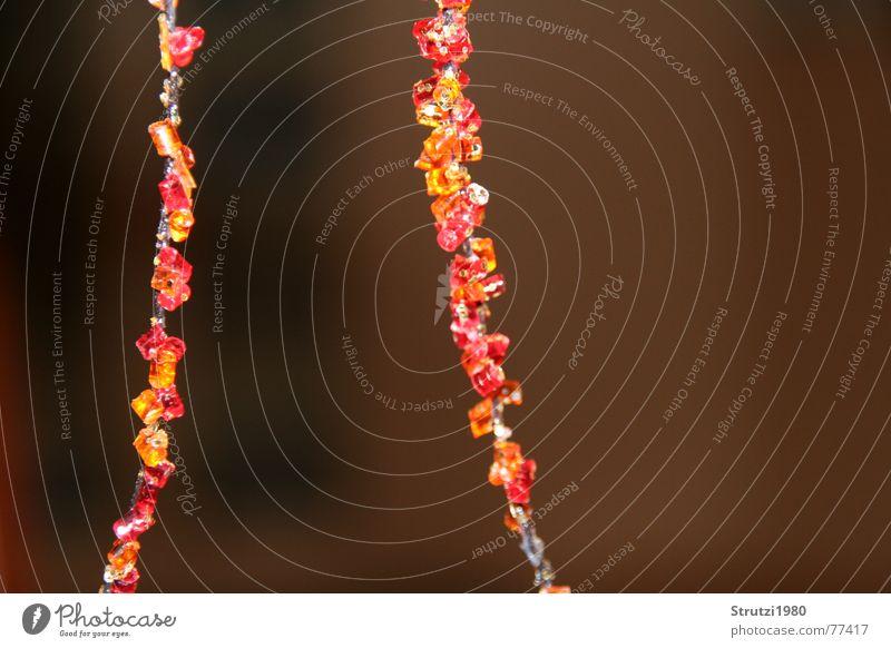 Lichterketten rot Herbst orange Brand Verbindung Seite Perle Kette Trennung herbstlich Farbenspiel Vordergrund