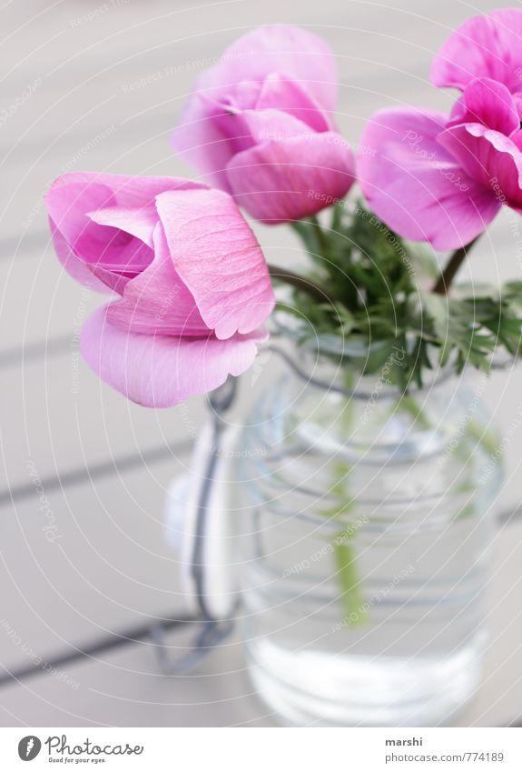 Blumengruß aus dem Garten Natur Pflanze Sommer Blume Frühling Garten rosa Dekoration & Verzierung Blühend sommerlich Vase