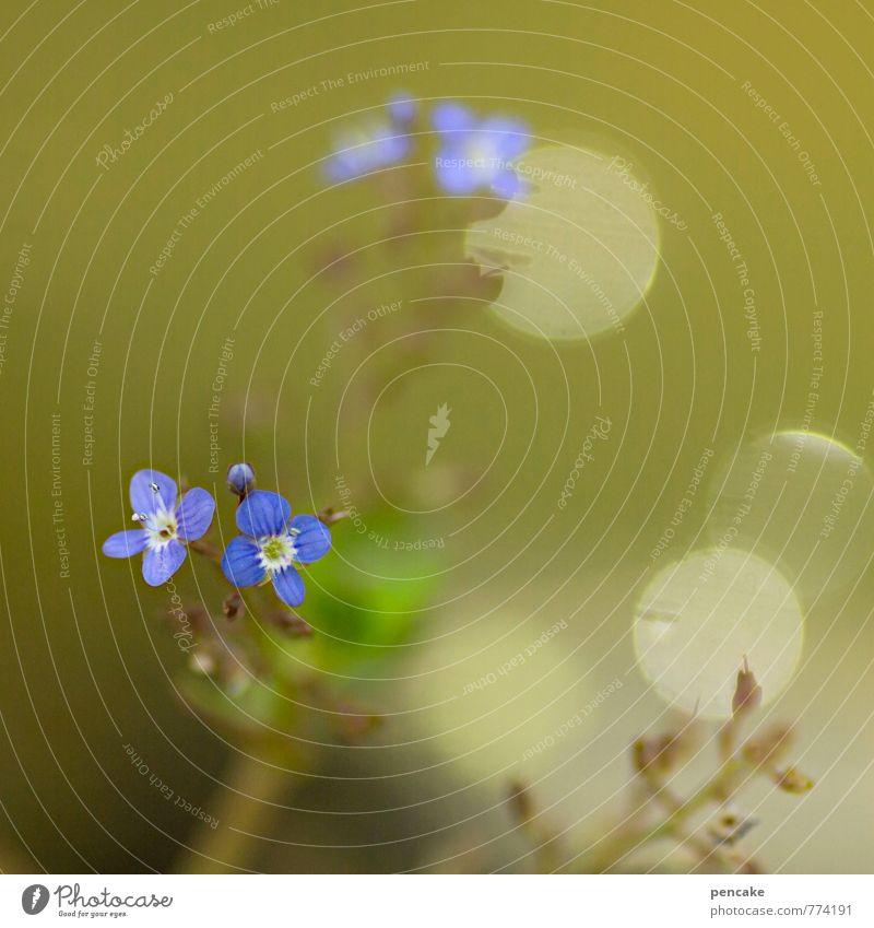teichträume | schweben Natur blau schön grün Wasser Pflanze Sommer außergewöhnlich Garten authentisch ästhetisch nass Urelemente Im Wasser treiben Teich
