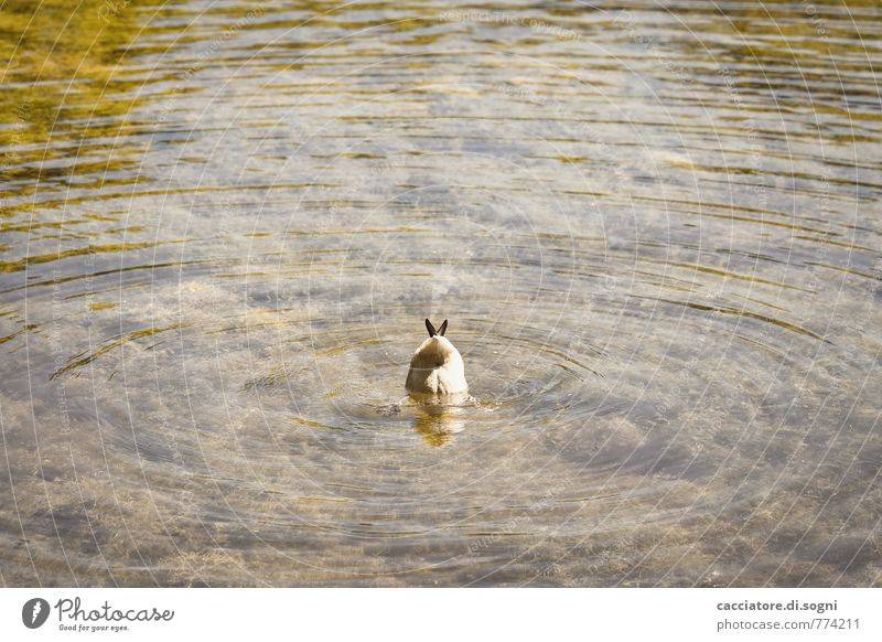Du kannst mich mal Wasser Tier Umwelt lustig klein Schwimmen & Baden Freiheit braun orange Wellen Wildtier Schönes Wetter einfach Neugier geheimnisvoll Suche