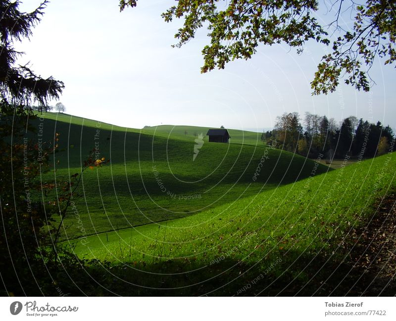 Schweizer Idyll Gras Wiese Tanne ruhig Erholung Spaziergang grün Herbst Licht Hügel Blatt Himmel Gelassenheit schweigen Rasen Grünfläche Ruhe bewahren Wolken