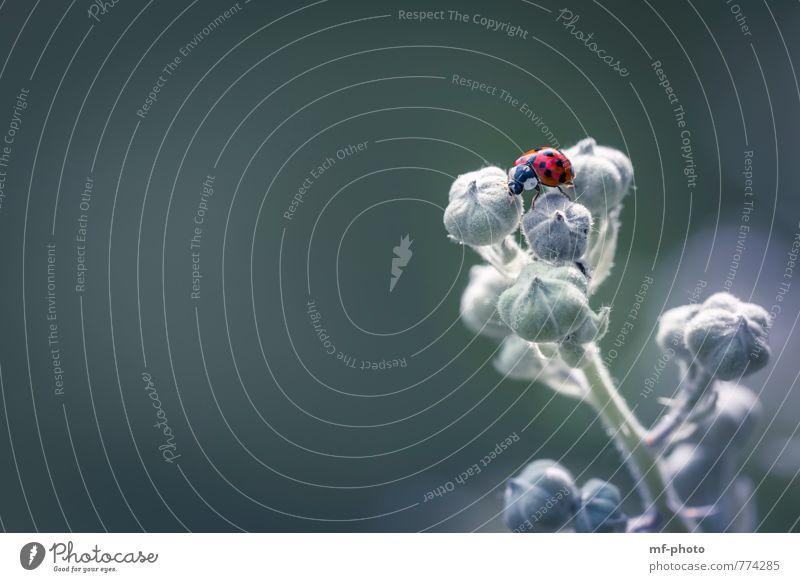 Balanceakt Natur Landschaft Pflanze Tier Käfer krabbeln grün violett rot Farbfoto Außenaufnahme Menschenleer Tag Tierporträt