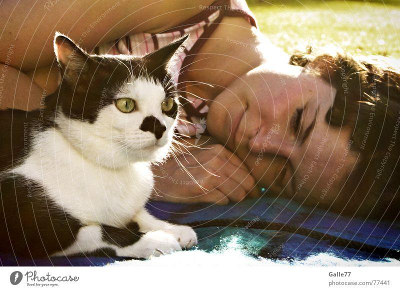 Traute Zweisamkeit Zusammensein Vertrauen Freundschaft Katze anhänglich Liebe liegen Decke Freude Blick