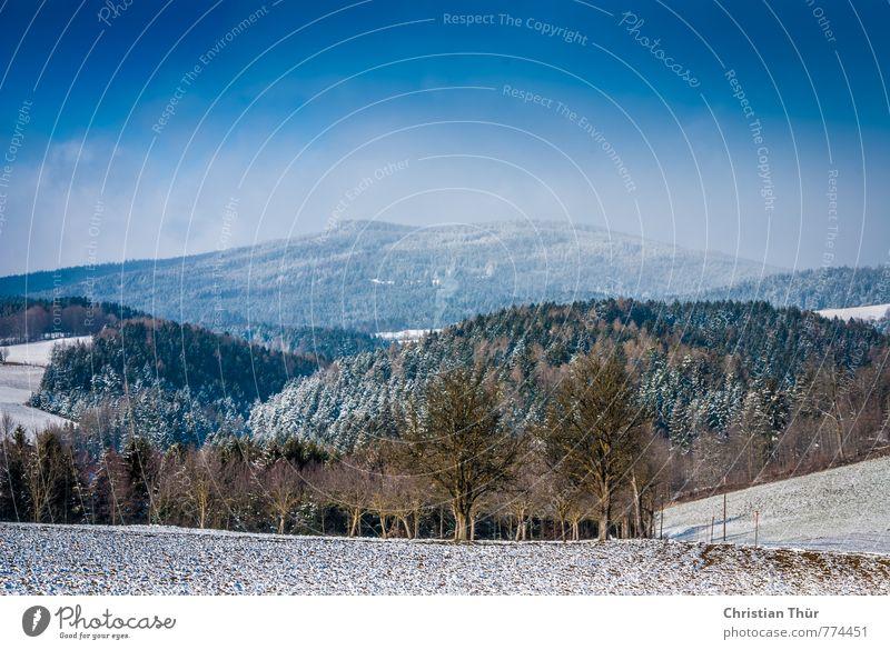 Angezuckertes Hügelland Natur Ferien & Urlaub & Reisen blau grün weiß Erholung ruhig Winter Umwelt Berge u. Gebirge Leben Schnee braun Horizont Feld
