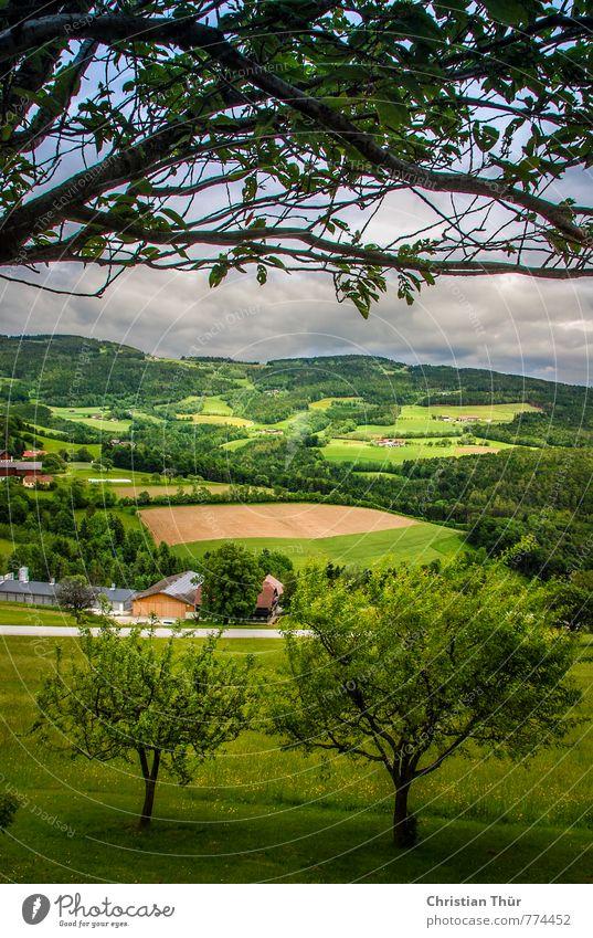 Hügelland Aussicht vom Pöllauberg Natur Ferien & Urlaub & Reisen blau Pflanze grün Sommer Sonne Baum Erholung Landschaft ruhig Wolken Gefühle Gras Glück