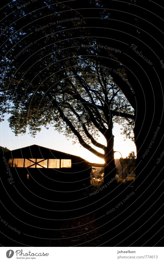 Feierabend Fabrik Lagerhalle Sonne Sonnenfinsternis Sonnenaufgang Sonnenuntergang Sonnenlicht Sommer Schönes Wetter Wärme Menschenleer Haus Hütte