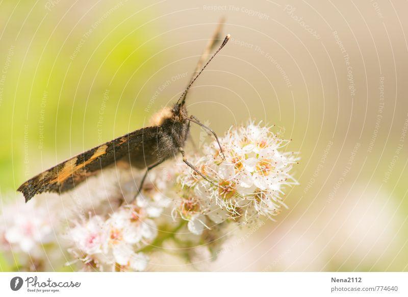 Textfreiraum | Have a rest Umwelt Natur Pflanze Tier Luft Frühling Sommer Schönes Wetter Blume Blüte Garten Park Wiese Feld Schmetterling Flügel 1 Glück