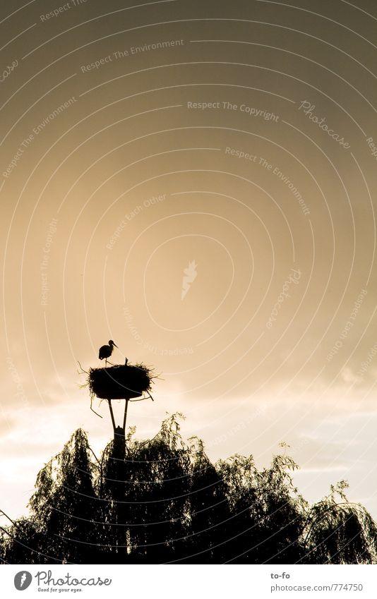 alleinerziehender Storch Himmel Natur Wolken Tier Umwelt Tierjunges Frühling Luft Wetter Regen Häusliches Leben Schutz Sicherheit Dorf Vertrauen Fürsorge