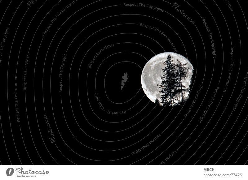 Halloween 2 Baum dunkel hell Beleuchtung Tanne Mond Halloween faszinierend