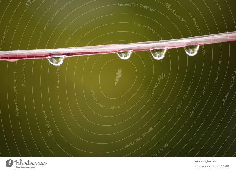 tropfen #14 Wasser Baum gelb Herbst Regen Wassertropfen Seil mehrere Schnur 5 Tau Wäscheleine Außenseiter