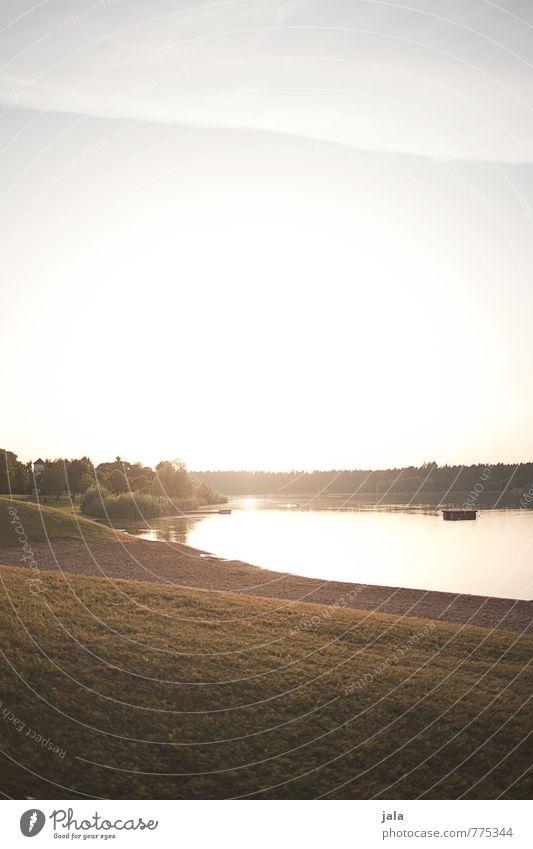 baggersee Umwelt Natur Landschaft Himmel Wolken Sonne Sonnenaufgang Sonnenuntergang Sonnenlicht Sommer Schönes Wetter Pflanze Baum Gras Sträucher Seeufer